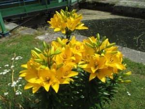dpd-fleurs