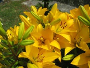 dpd-fleurs-macro